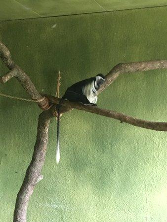 Birmingham Zoo Photo