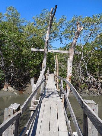 Tambor, Kosta Rika: brug van mangrove naar jungle gedeelte