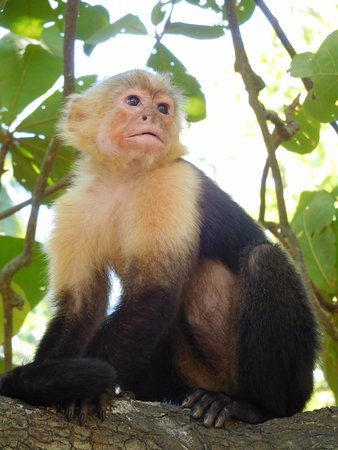 Tambor, كوستاريكا: Aap
