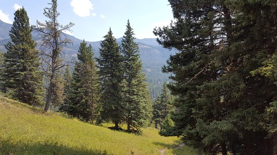 Trout Lake Trail: View to the northeast, towards Cooke City