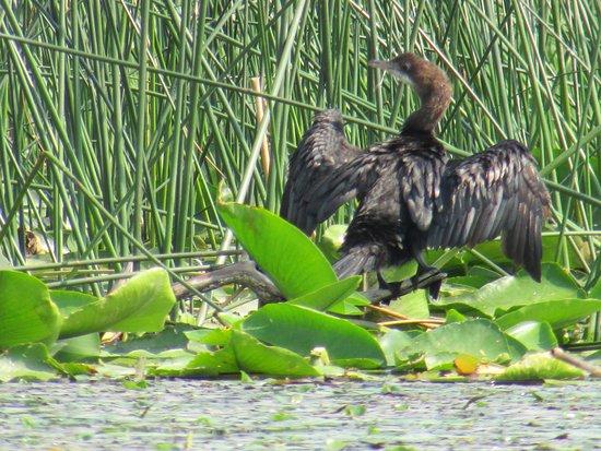 Bijela, Monténégro : lac de SKADAR