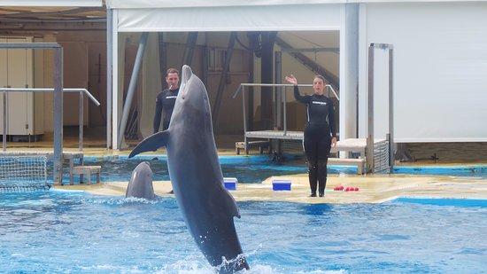 Aquopolis Costa Dorada : Dolphin show at aquopolis