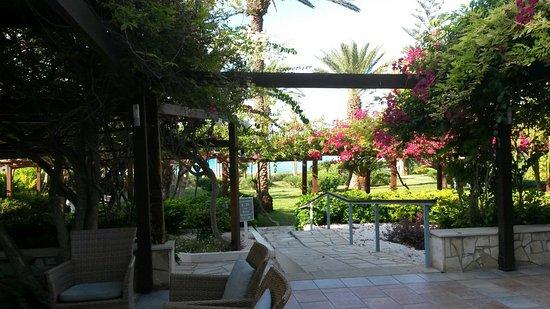 Nissi Beach Resort: 20160903_084618_large.jpg