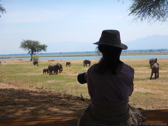 Wilderness Safaris Ruckomechi Camp: Daily occurrence from tent 10