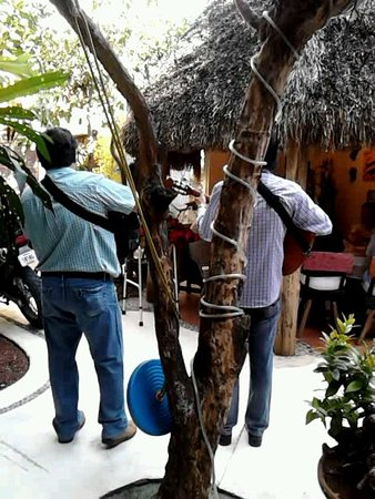 Casa Giron : Musicians in the courtyard, palapa to right