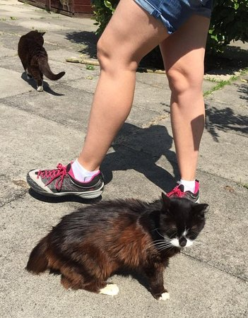 Stelling Minnis, UK: surrounded by cats