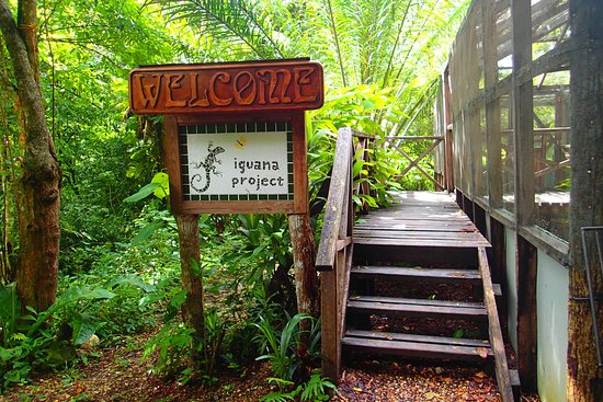 Green Iguana Conservation Project : Sign