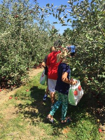 Belleville, Ιλινόις: Picking apples