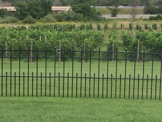 12 Corners Vineyards: photo0.jpg