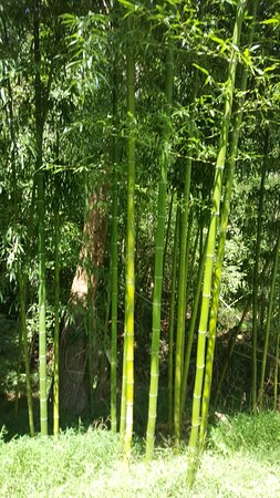 Tanglewood Park: 20160904_143409_001_large.jpg