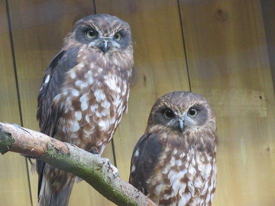 Randalstown, UK: Beautiful array of deer, owls & Eagles