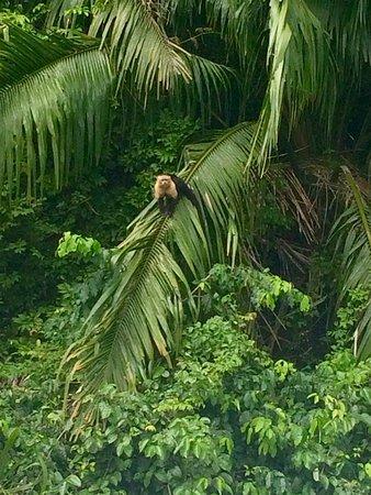 Gamboa Rainforest Resort Chagres River Boat Tour: photo6.jpg