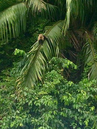 Gamboa Rainforest Resort Chagres River Boat Tour: photo7.jpg