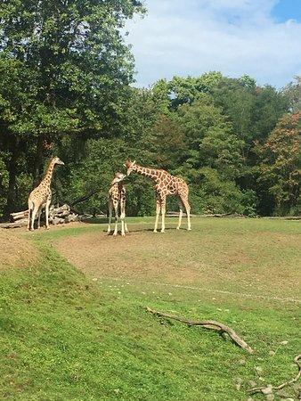 Woodland Park Zoo : photo1.jpg