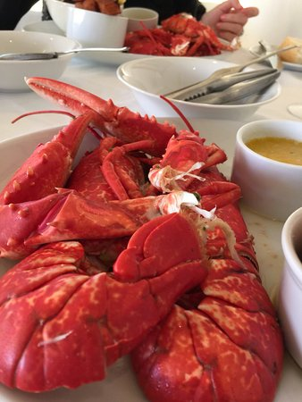 Port Appin, UK: Lobster was fresh and delicious