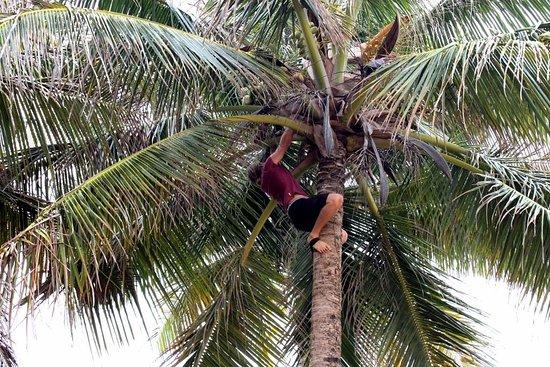 Coconut Revolution 101