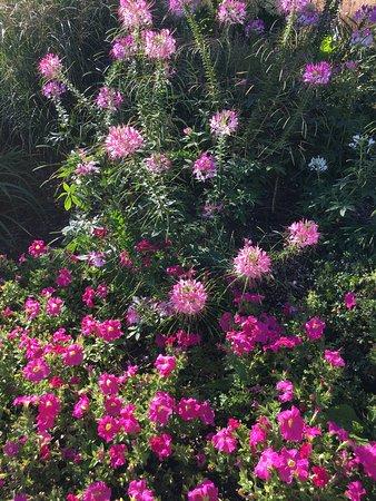 Klehm Arboretum U0026 Botanic Garden: Beautiful Flowers And Trees Here