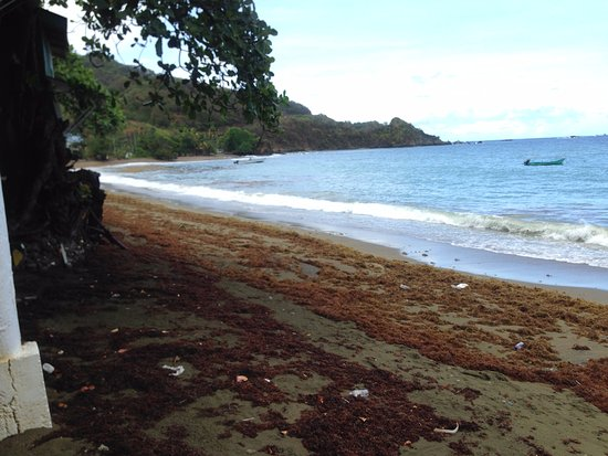 Speyside, Tobago: seasonal seaweed on beach in front of restaurant