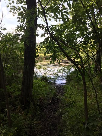 Lake Orion, MI: photo4.jpg