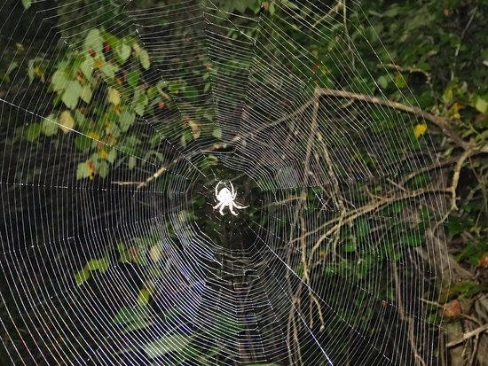 Mount Sterling, OH: Great spider photo ops on the Rich VanHorn Nature Trail at night