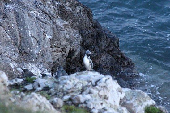 Pohatu Penguin Habitat 이미지