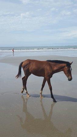 Samara Beach: 20160902_090712_large.jpg