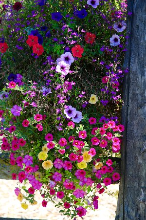Armstrong, Canada: Hanging Flower Basket at the Log Barn