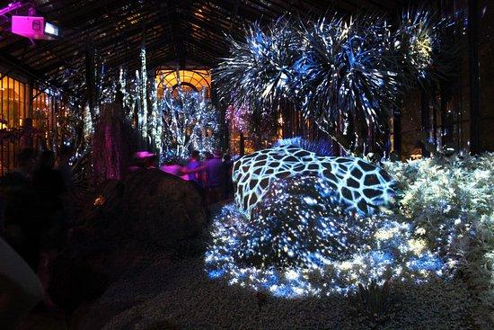 Night Light Show Picture Of Longwood Gardens Kennett Square Tripadvisor
