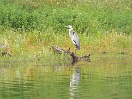 Fool Hollow Lake Recreation Area: It's for the birds
