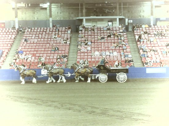 PNE - Pacific National Exhibition: Clydesdales