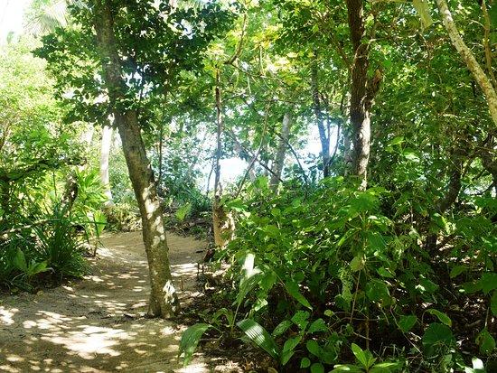 Uoleva Island, Tonga: Private pathway to each fale