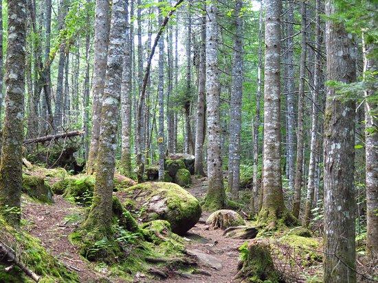 สโตนฮัม, แคนาดา: The Cascades