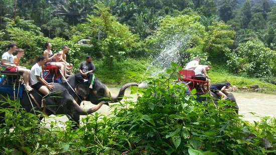 Kok Chang Safari Elephant Trekking: Засада!