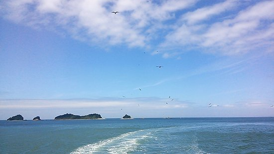 Dolphin Island Foto