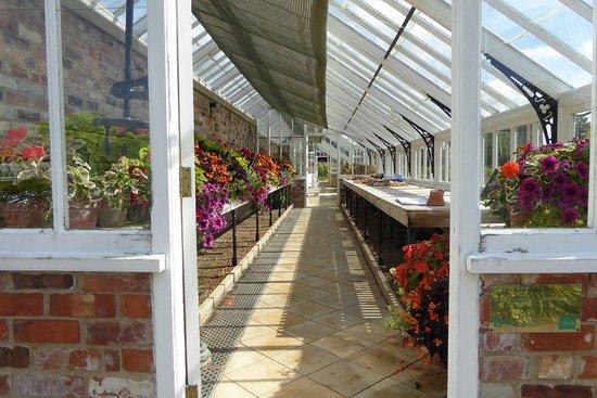 Хелмсли, UK: Inside of greenhouse.