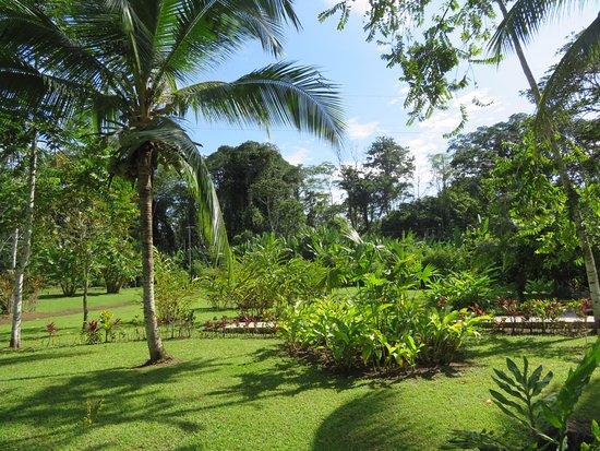 Der Wunderbare Garten Picture Of Passion Fruit Lodge Cahuita