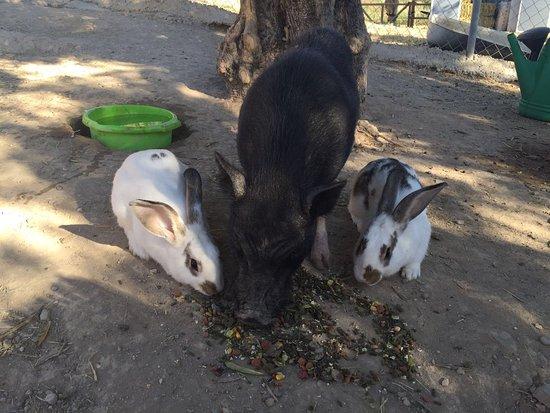 Guaro, Espanha: de konijnen