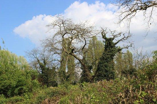 WWT London Wetland Centre: деревья, покрытые плющом