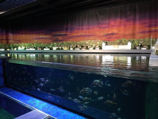 Int rieur de l 39 aquarium photo de istanbul aquarium for Aquarium interieur