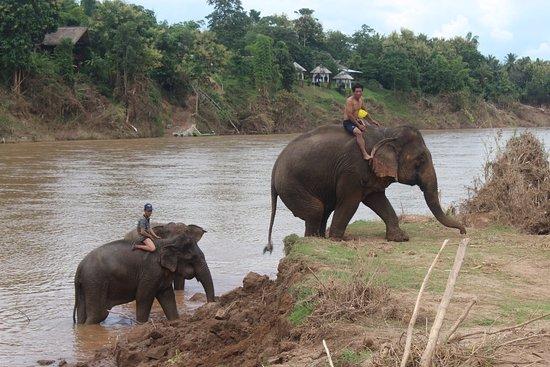 Ban Xieng Lom, Laos: baignade éléphant