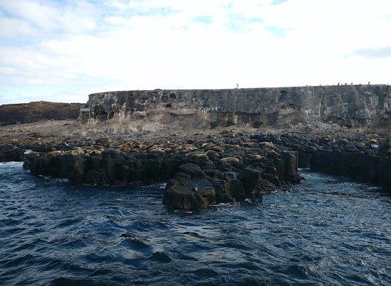 Cowes, Australia: Seals laze at the Seal Rocks