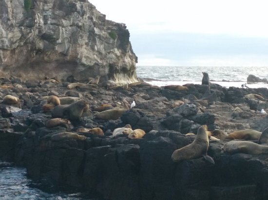 Cowes, Australia: Seals - Sunbathing on a sunny afternoon