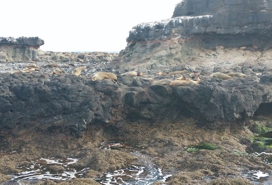 Cowes, Australien: More Seals...