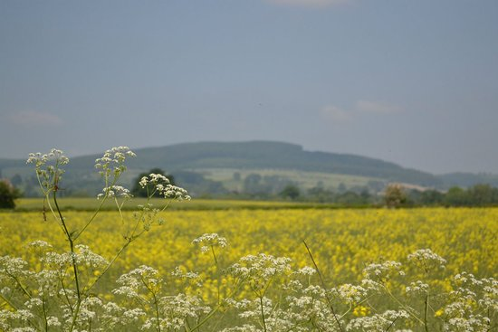 Bucknell, UK: Hopton Hill In Summer