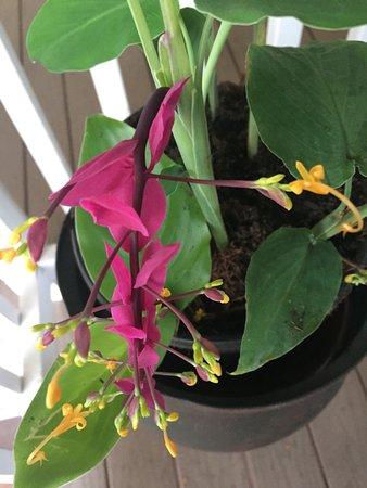 Lilikoi Inn: besondere Orchidee