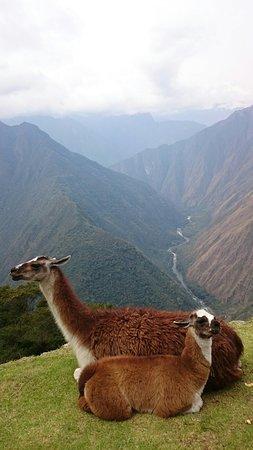 Llama Path: DSC_3112_large.jpg