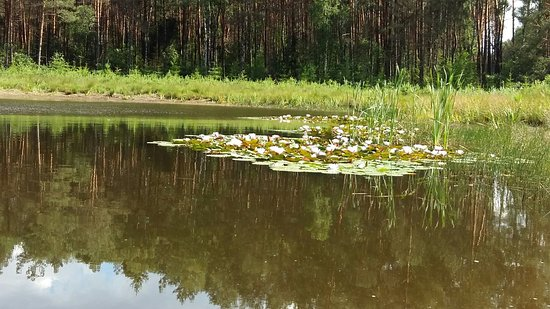 Karolewski Forest