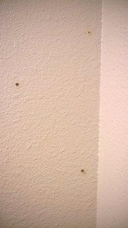Woodland, WA: bathroom corner wall above toiled