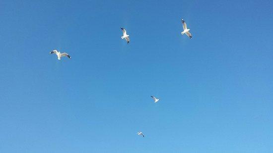 Scarborough Beach: 20160903_161908_large.jpg