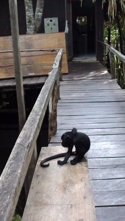 Juma Amazon Lodge Photo